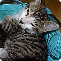 Adopt A Pet :: Oliver - Lighthouse Point, FL