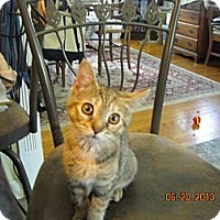 Adopt A Pet :: Laney - Riverside, RI