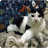 Adopt A Pet :: Albert (with Cecil) - Portland, OR