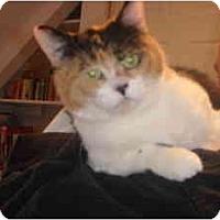 Adopt A Pet :: Penny - Montreal, QC