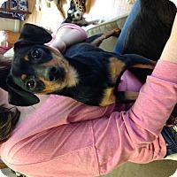 Adopt A Pet :: Carlos - Homewood, AL