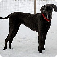 Adopt A Pet :: Stormy - Pearl River, NY
