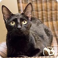 Adopt A Pet :: Winona - Chicago, IL