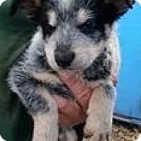 Adopt A Pet :: Newton - Gainesville, FL