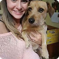 Adopt A Pet :: Andre - Everett, WA