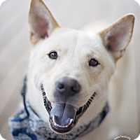 Adopt A Pet :: Shiloh - Kingwood, TX