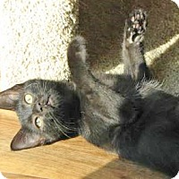 Adopt A Pet :: Pearl - Davis, CA