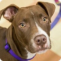 Adopt A Pet :: Penny - Grass Valley, CA