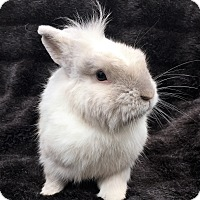 Adopt A Pet :: Nym - Watauga, TX