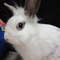 Adopt A Pet :: Walter - Newport, DE