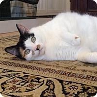 Adopt A Pet :: Rosie *front declawed* - Verona, WI
