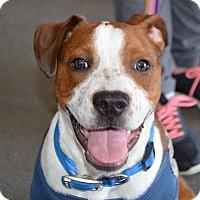 Adopt A Pet :: Franklin - Seabrook, NH