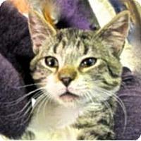 Adopt A Pet :: Guinness - Davis, CA
