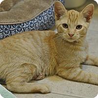 Adopt A Pet :: Louie (Super friendly!!) - New Smyrna Beach, FL