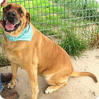 Adopt A Pet :: Ziva - Pilot Point, TX