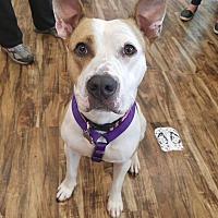 Adopt A Pet :: Ryelee - West Allis, WI