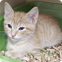 Adopt A Pet :: Betsee $20 - Lincolnton, NC