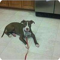 Adopt A Pet :: Dylan - Bloomingdale, GA