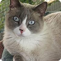 Adopt A Pet :: CUPID - lake elsinore, CA