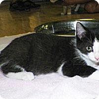 Adopt A Pet :: Webber - Dover, OH