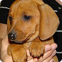 Adopt A Pet :: Tiki - Greenville, RI