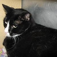 Adopt A Pet :: Fritz - Logan, UT