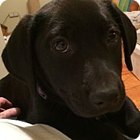 Adopt A Pet :: Ellison - Evergreen, CO