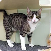 Adopt A Pet :: Janja - Creston, BC