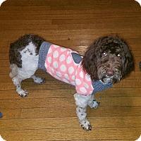 Adopt A Pet :: Luna - New Middletown, OH