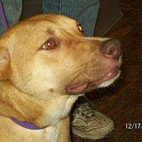 Adopt A Pet :: Blaze 2 - Mexia, TX