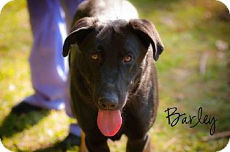German Shepherd Dog Mix Dog for adoption in Middleburg, Florida - Barley