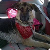 Adopt A Pet :: LuLu - Inverness, FL