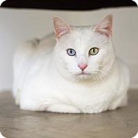 Adopt A Pet :: Bunny - Aurora, CO