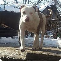 Adopt A Pet :: Djay - Oakland Gardens, NY