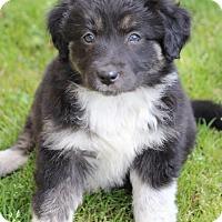 Adopt A Pet :: George - Westport, CT
