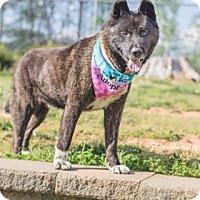 Adopt A Pet :: Princess Smith - Greensboro, NC