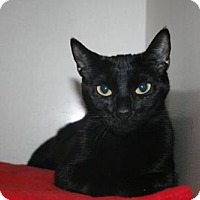 Adopt A Pet :: Mila - Lancaster, PA