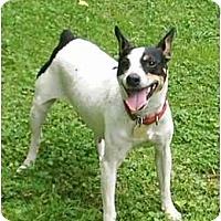 Adopt A Pet :: Sweetie - cedar grove, IN
