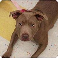 Adopt A Pet :: Adalai - Rochester, NY