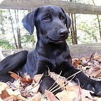 Adopt A Pet :: Baby Max - Marlton, NJ