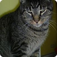 Adopt A Pet :: Mansfield aka Manny - Hamburg, NY