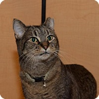 Adopt A Pet :: Nicky *CL* - Independence, MO
