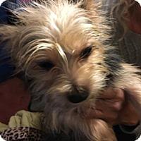 Adopt A Pet :: Jester - Thousand Oaks, CA