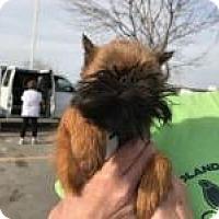 Adopt A Pet :: Bennie-Pending Adoption - Omaha, NE