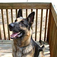 "Adopt A Pet :: Huckleberry ""Huck"" - Odessa, FL"
