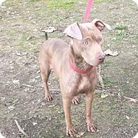 Adopt A Pet :: Lady - Harrisonburg, VA