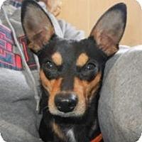 Adopt A Pet :: Choo Choo ADOPTED!! - Antioch, IL