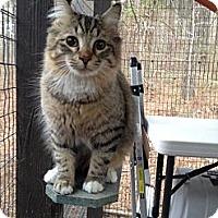 Adopt A Pet :: Eeleeo - Monroe, GA