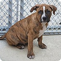 Adopt A Pet :: Casey - Minneola, FL