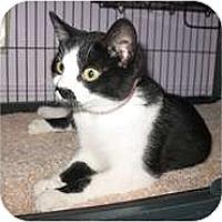 Adopt A Pet :: Dixie - Shelton, WA